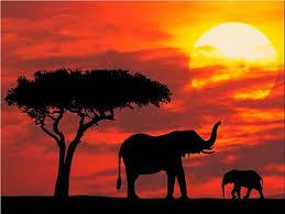 http://tbn1.google.com/images?q=tbn:2zO1gOnoIQunUM:http://livingviajes.com/wp-content/uploads/2008/11/silhouetted_kenya1.jpg