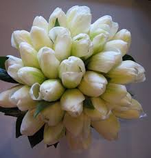 white_tulip.jpg