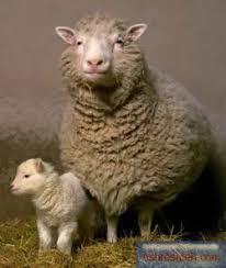 اصول پرورش گوسفند