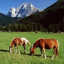 http://tbn1.google.com/images?q=tbn:7Vr9fCb_YUxWlM:http://www.webimagenes.com/images/fotos-caballos-naturaleza-p.jpg