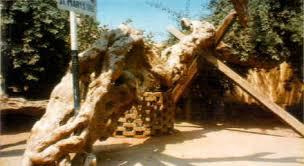شجرة مريم بالمطرية 936446136