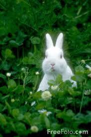 01_23_51---Rabbit_web.jpg