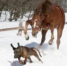 chien-cheval