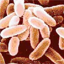 Preuves scientifiques concernant les attaques à l'anthrax thumbnail
