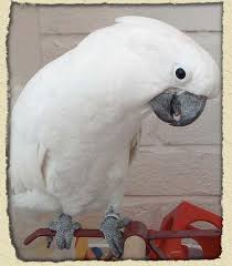 �����: �����. ����. ������. ����� ���� ���� cockatoo%20umbrell