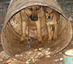 external image Chained-Mother-Pup.jpg