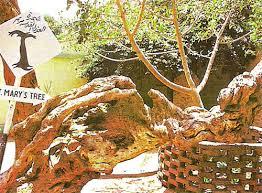 شجرة مريم بالمطرية Egypt1h