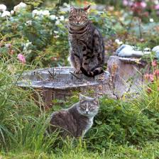 http://tbn1.google.com/images?q=tbn:aouJspVT4-SUjM:http://www.mooseyscountrygarden.com/dog-garden-path/garden-tree-stump-cats.jpg