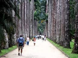 http://tbn1.google.com/images?q=tbn:cnR1dYdJjhIPWM:http://www.sbdrj.org.br/dermario/imgs/jardim_botanico2.jpg
