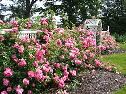 http://tbn1.google.com/images?q=tbn:e7sFkZVfQpWo4M:http://www.harringtonhouse.ca/Rose-garden.jpg