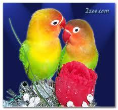 تابع .. صور جميله للطيور 74f6ae6682.jpg