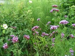 jardin-ens-ete-arnal-f-126.1208974073
