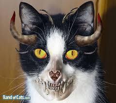 pictures-of-cats-halloween_skull-cat