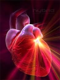 زرع القلب