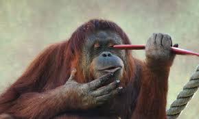 Karta the orang utan.  You may sleep safe at night.