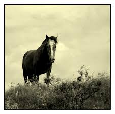 external image horse.jpg