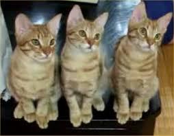 http://tbn1.google.com/images?q=tbn:umhVY6BJ0AaeRM:http://www.maniacworld.com/tennis-cats.jpg