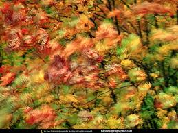 leaves - Google Image Search