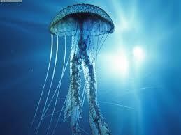 Cómo actuar ante un picotazo de medusa