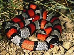 Cómo actuar ante una mordedura de serpiente